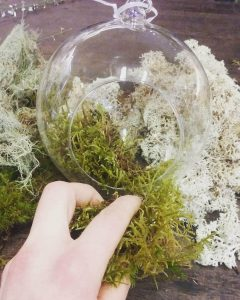 Have You Been Obsessed With Terrariums Lately Adonis Flowers